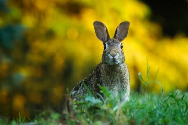 Conejos cuidados, curiosidades razas