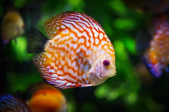 Todo sobre peces características, cuidados, curiosidades