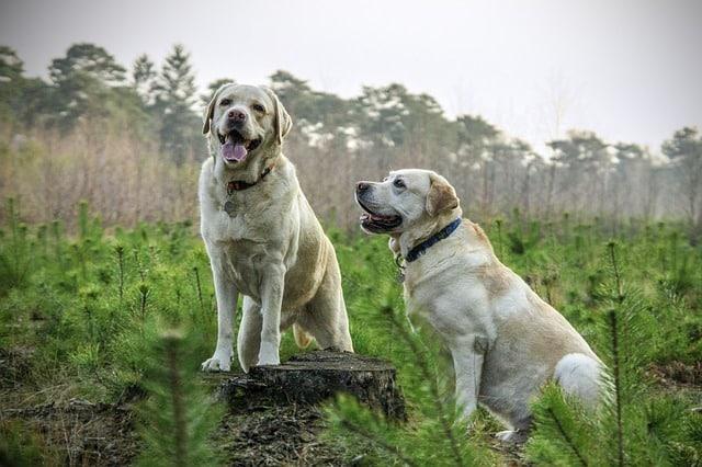 perros cuidados curiosidades y más