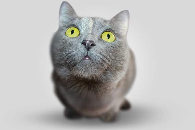 Todo sobre el cuidado de los gatos